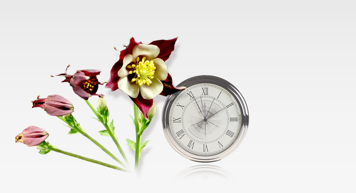 Time-lapse felvétel