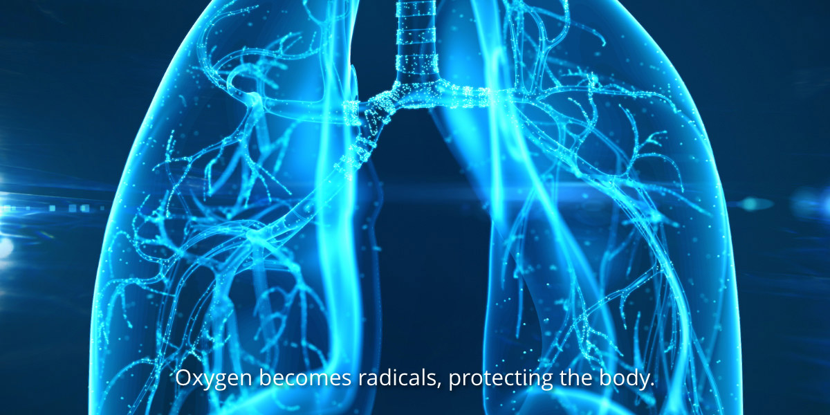 Oxygen becomes radicals, protecting the body.