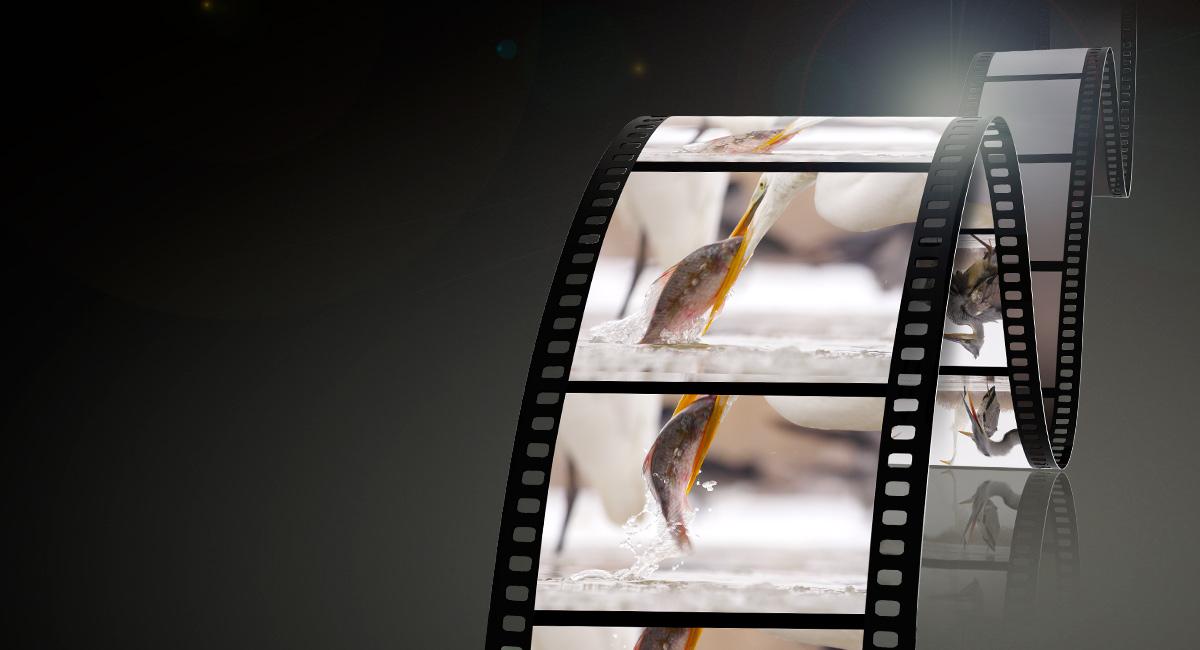 Videók támogatása – tökéletes videofelvétel