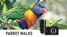 Photography Walking Tour with Australian Experts & LUMIX G9 - Parrot Walks