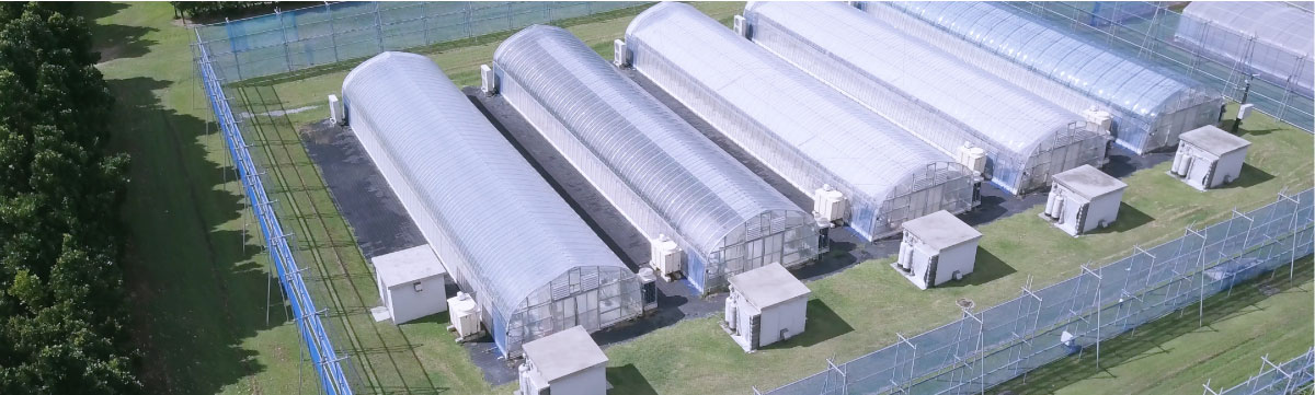 Photo: Aerial shot of the IT Greenhouse test facility on the island of Ishigaki, Okinawa.