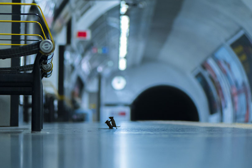 Say cheese: image of mice scrapping on London Underground station platform wins Wildlife Photographer of the Year LUMIX People's Choice Award