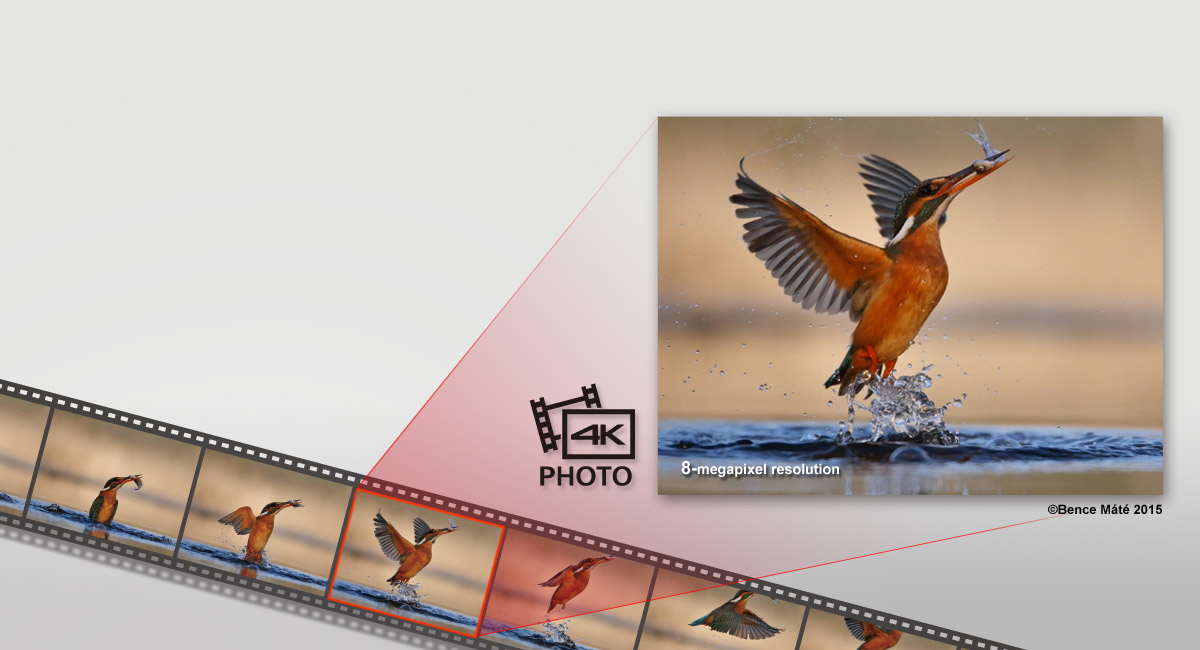 4K Photo — Capture the Perfect Moment