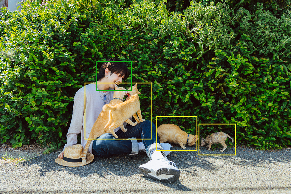 Deep learning technology : Animal detect