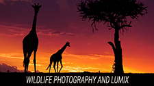 Wildlife Photography and LUMIX