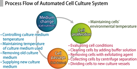 Process Flow of Automated Cell Culture System / 1. Cell proliferation 2. Cell passage (Cell division) 3. Medium change (Cell nutrition)