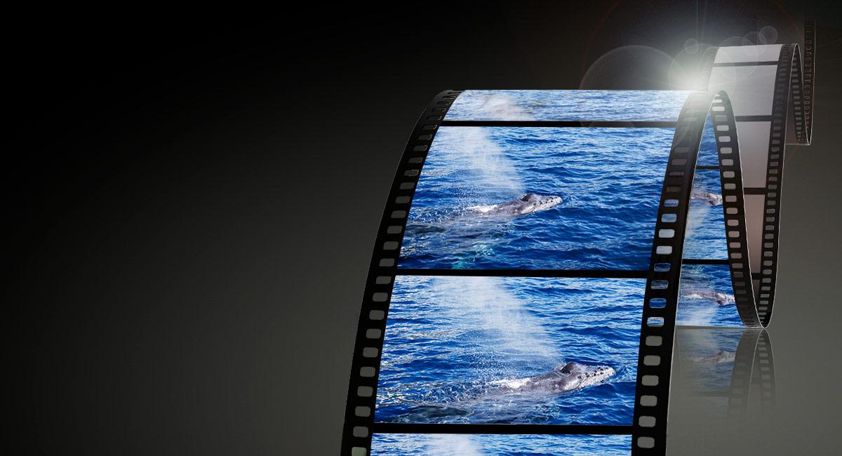 Videótámogatás a tökéletes felvételekért